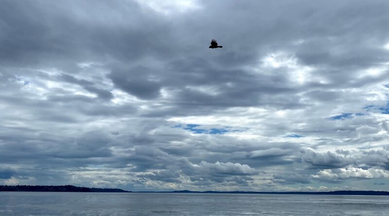 bird soaring against backdrop of cloudy sky